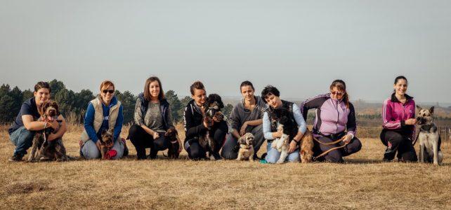csoportos kutyaoktatás