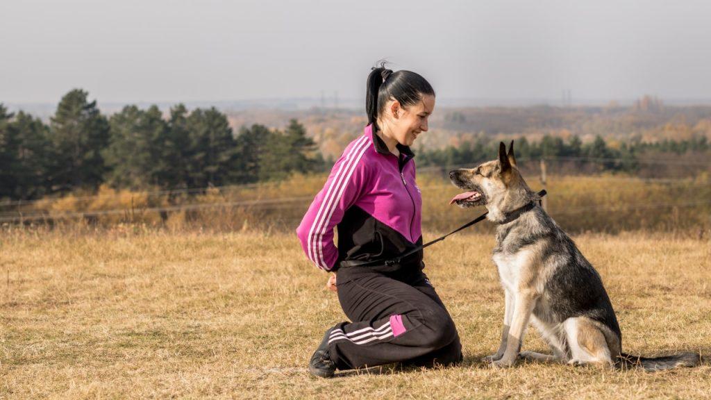 egyéni kutyaoktatás